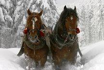 Snowland  / by Debbie SB