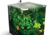Creating Ornamental Shrimp Tanks / by PetSolutions Pet Supplies