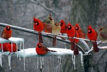 Birds / by ann Knapp