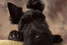 Le Chien / I love scotties!  No really...I do.  / by This Mommy Runs