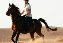 Best Exotic Excursions / Dive into local culture and say yes to the once-in-a-lifetime experiences you'll find here. Add unbeatable service, luxurious accommodations and breathtaking views, and you'll see why these hotels and resorts made the list. From Member Favorites 2014: http://spg.to/exotic  / by Starwood Preferred Guest