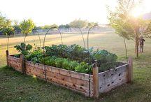 Garden.  / by Tracy Luegge