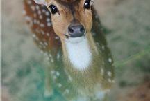 So Cute! / by Tricia Leeb-Anderson