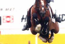 HORSE JUMP BABY JUMP / by Mary Dumke