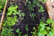 Garden / by Patty Jones