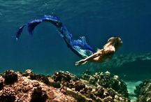 Mermaid  elements / by Just Allie