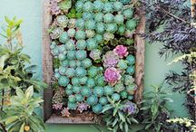 space:::gardens & outdoor spaces / by Jenna Chisholm