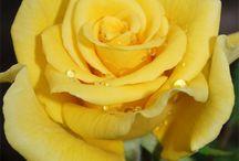 HAPPY MELLOW YELLOW / I LOVE COLOR, YELLOW FAV / by Gloria JALDM