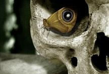 Skulls / by vallerie Smith