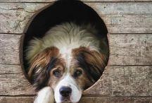 Dogs II / by Silvana Faltoni