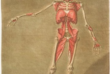 anatomy / by Lianne Halliday