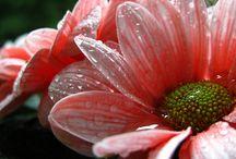 Daisy-daisy / by Gina Latner