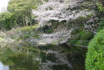Gardens: Japanese & Asian / Japanese, Chinese, Korean, Asian garden and landscape / by Andee Barbour