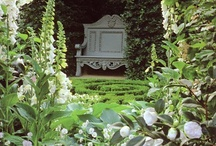 In the garden / by Juli Ortiz-Shockley