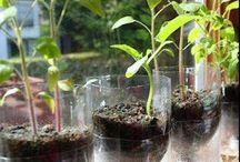 Gardening/Lanscaping / by janice burnett
