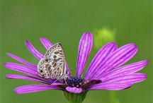 Nature photos / by Maria Elkins
