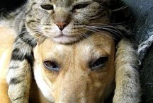 Kats & Dawgs / by Beth Ellsmere