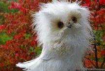 Lechuzas / Owls  / by Joo Vera GB