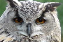 Owls / by Tara Weaver