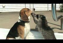 Animals - I Love 'em! / by Vicki McCullough