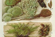 Botanical illustrations / by Eli Camacho