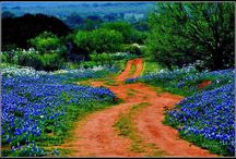 Beauty around Texas / by 1st Class Lodging Reservation Service