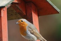 Wildlife / We live in The Scottish Highlands just outside Fort William and have so much amazing wildlife in our garden.  / by Huntingtower Lodge B&B