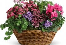 Green & Blooming Plants / by Villere's Florist