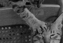 animals photo / by Petra Blahova