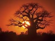 Intelligent Beauty Labs-Baobab / by DermStore