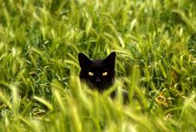 Black Cats / by Tamar Arslanian