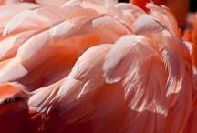 Colors: Peach / by Jolanda van Pareren