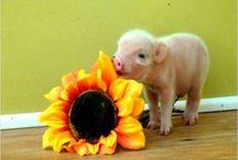 adorable animals / by Felicia Meador