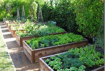 vegetablegardens / by Rozen en Ruiten