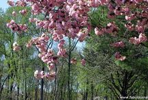 Beautiful trees and flowers / by Kristin Berg