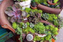 amazing garden / by Ekaterina Kocharovskaya