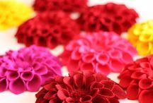 flowers / by Jo Haynes