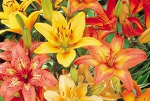 Lilies / by Eve Hogue