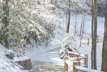 Winter / by Cathy Bizri