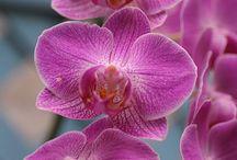 BEAUTIFUL FLOWERS / by LEE GROKKING