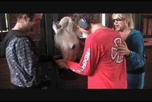 Autism: Horse Therapy / by The Big A Word