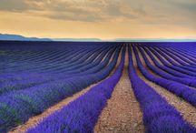 Lavender Macarons  / by Richart Chocolates