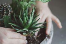 A Little Bit of Green / by Elizabeth Novak