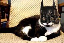 I got cat class and I got cat style  / by Laura Beth Love