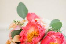 pretty things / by Danielle Pagnard