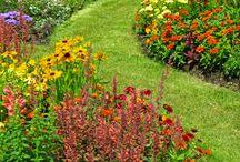 Garden / by Lidia Davis
