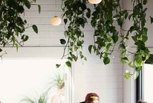 Hanging Planters / by Rachel Prince