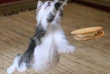 Cats / by Akiko Miyazaki