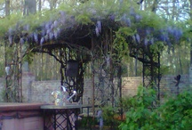pergola / arbors and fauna and windows and doors, Oh My ! / by ELIZABETH & CO