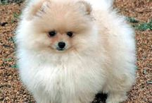 Fuzzy Happiness / Fuzzy creatures just make you feel better / by Scott Mitchell